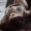 Tegan West